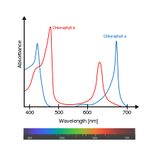 Chlorophyll_ab_spectra