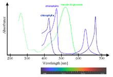 Superposition of spectra of chlorophyll a and b with oenin