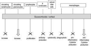 Effects of cortisol on cell immune responses