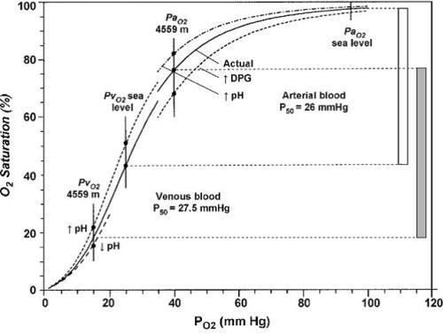 O2 equilibrium curves of human blood illustrating the effects of increases in red cell DPG and pH at high-altitude