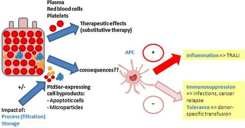 Potential consequences of phosphatidylserine-expressing cell by-products in transfusion