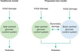 Proposed contributions of defective brain- and islet-centred glucoregulatory systems to T2D pathogenesis