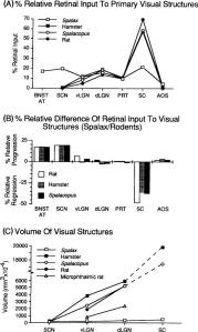 retinal input to primary visual structures in Spalax