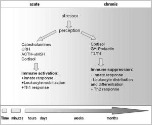 Stress and immune response