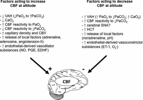 Summary of the major factors acting to increase ( plus) and decrease (minus) CBF during exposure to hypoxia