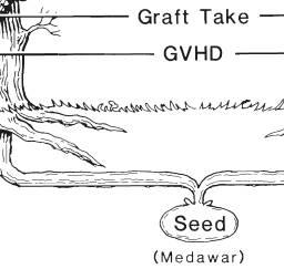 The growth of bone marrow and whole organ transplantation