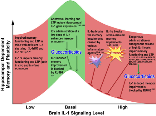The inverted U-shaped effect of IL-1 on memory and plasticity is mediated by glucocorticoids