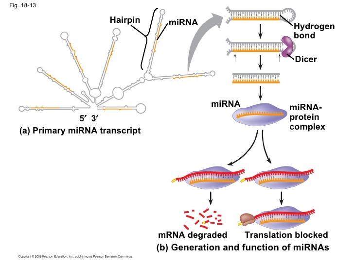 18-13 miRNA- protein complex ap-chap-18-pp-42-728