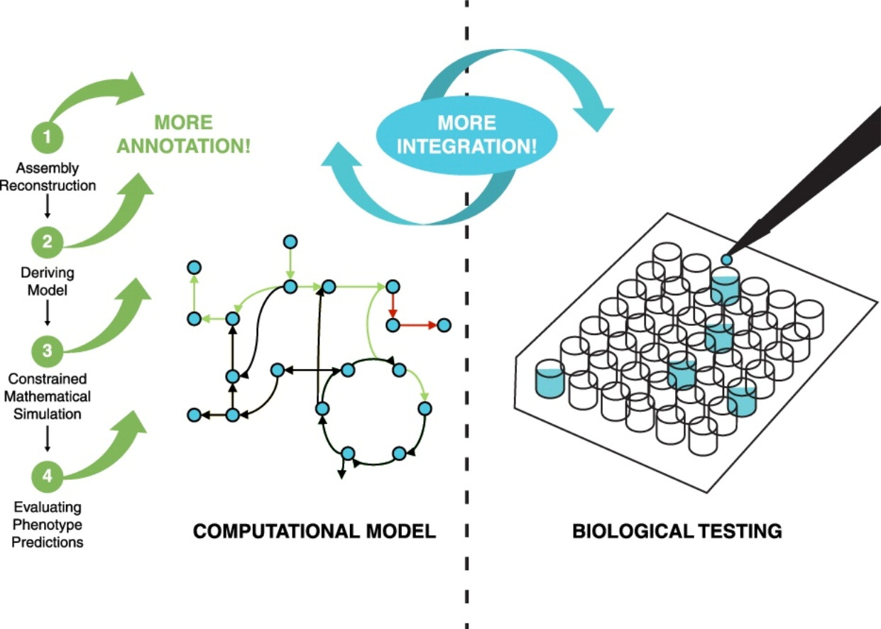 metabolic network reconstruction
