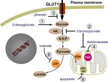 mitochodrial stabilization gr2