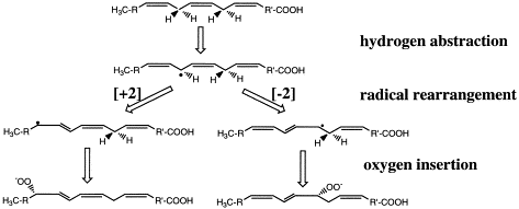 Radical mechanism of the lipoxygenase reaction pattabhiraman