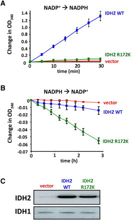 Expression of R172K Mutant IDH2 Results in Enhanced α-Ketoglutarate-Dependent Consumption of NADPH