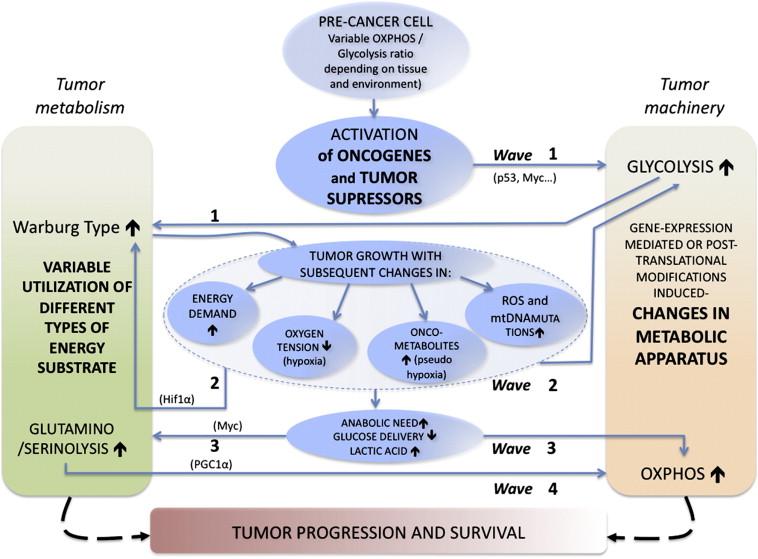 Interplay between energy metabolism, oncogenes and tumor microenvironment