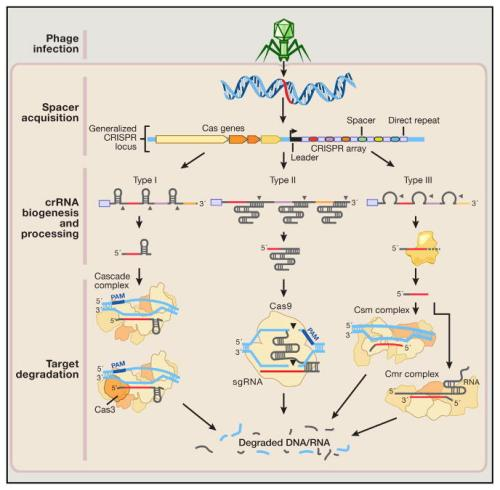 Development and Applications of CRISPR-Cas9 for Genome Engineeri
