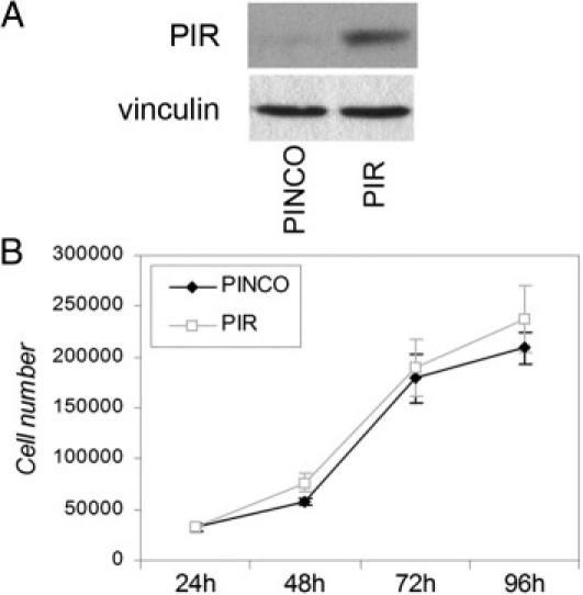 PIR overexpression in melanoma