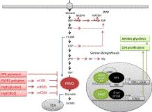 PKM2 integrates diverse signals to modulate metabolic flux and cell proliferation