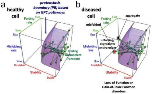 proteostasis boundary (PB)
