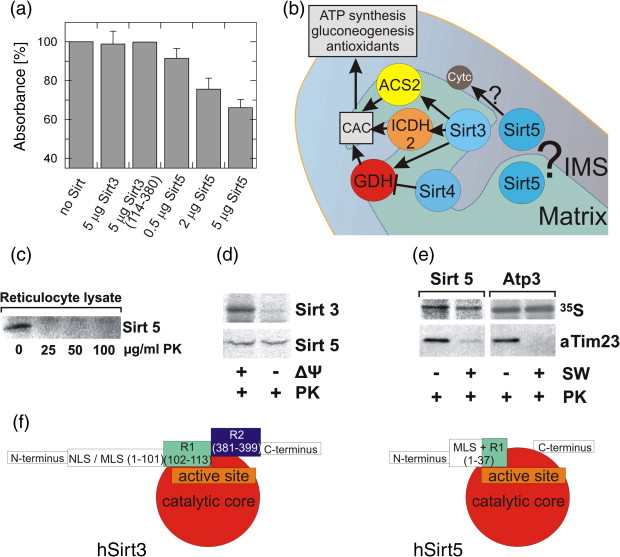 Sirt5 can deacetylate cytochrome c