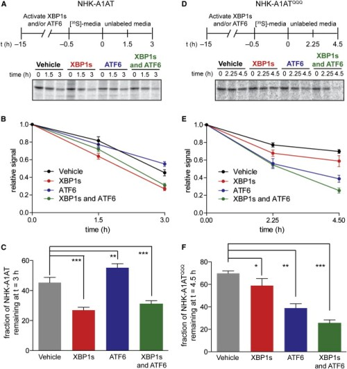 xbp1s-and-or-atf6-activation-differentially-influences-the-degradation-of-nhk-a1at-and-nhk-a1atqqq