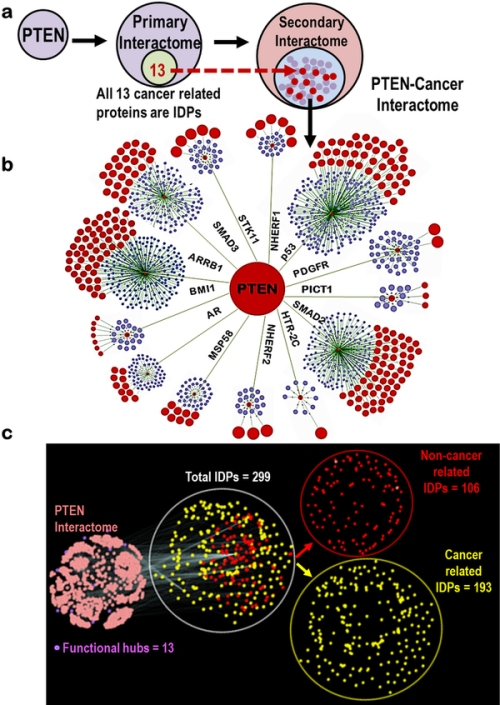 Derivation and disorder analysis of the PTEN cancer interactome. srep02035-f4