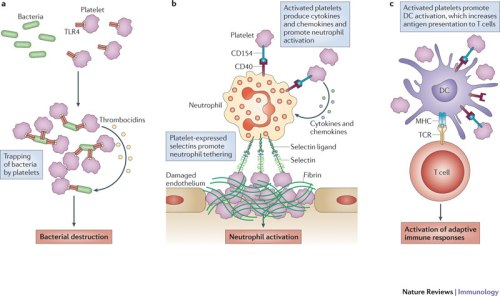 platelets and the immune continuum nri2956-f3