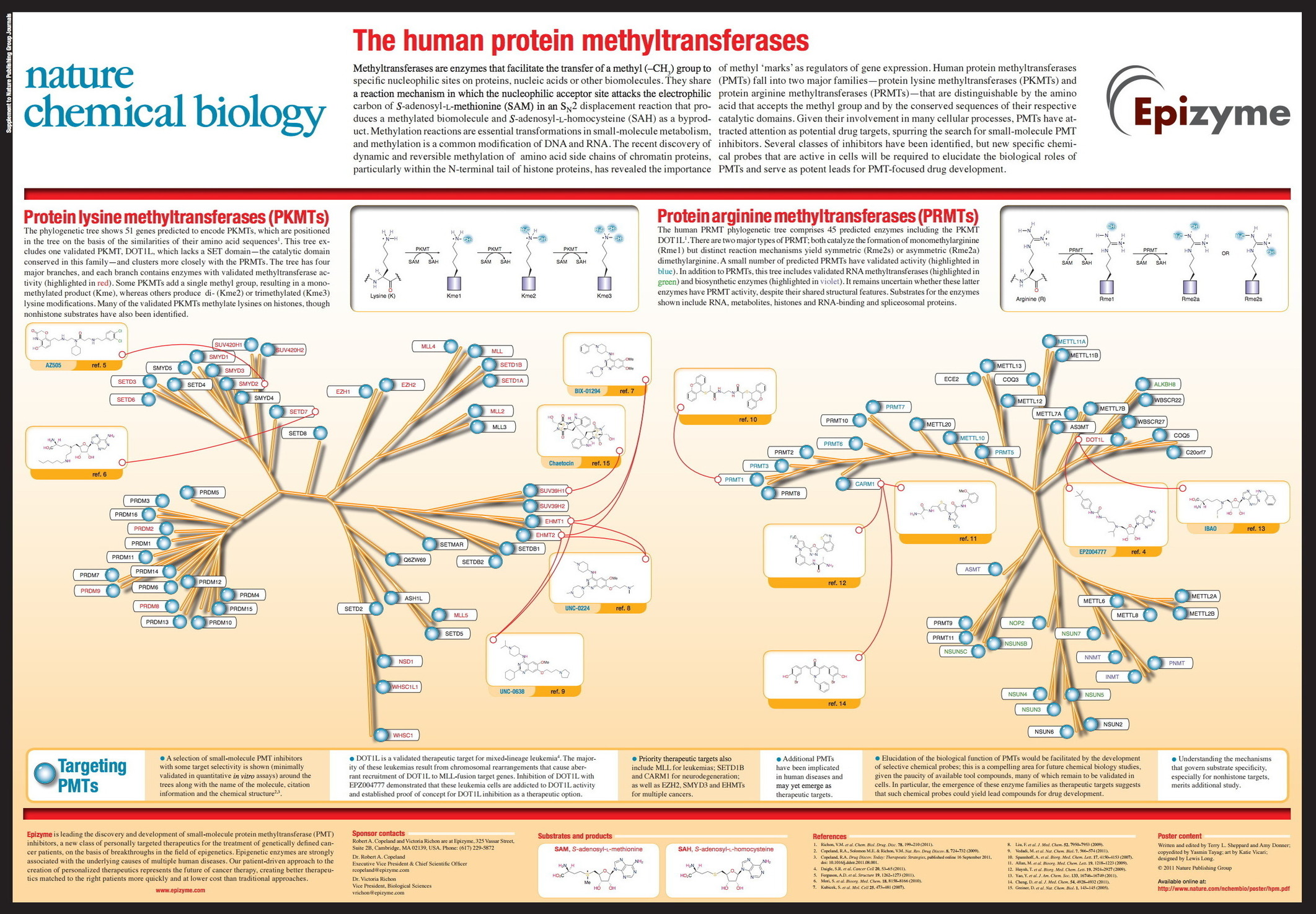 human biology protein production Organisms (also known as there are also transgenic livestock that produce human proteins  protein production can be straightforward if the source of the novel.