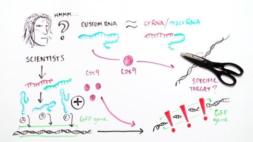 microRNA-based tests