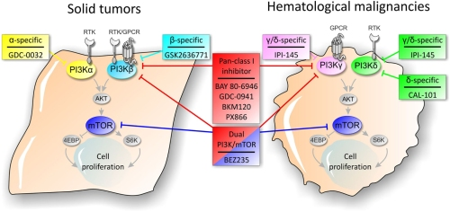 PI3K signaling pathway inhibitors in solid tumors and hematological malignancies