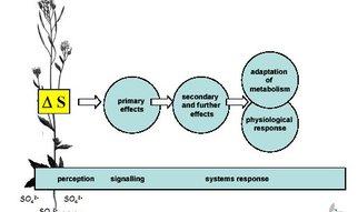 metabolite profiling