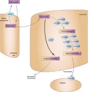pharmacogenetics anti-coagulant theraphy