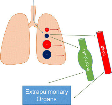 Pulmonary uptake of nanoparticles depends on size and surface charge