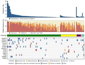 Relationship of mutational spectrum and rates with clinicopathological characteristics in cervical carcinoma presented