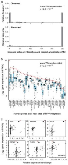 Relationships between HPV integration, copy number amplifications and gene expression in cervical carcinoma