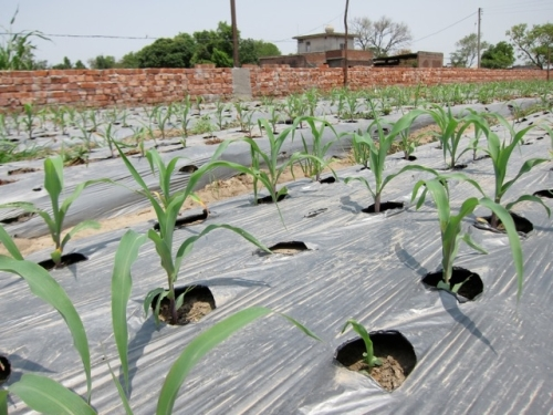 Seedlings fed by a micro-irrigation system