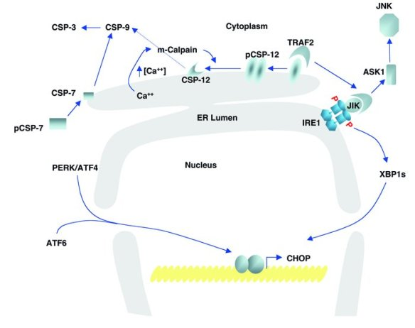 Autophagy   Leaders in Pharmaceutical Business Intelligence