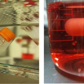 Lab Grown Brains and more from Twittersphere on 3D Bio-Printing News (1/4)
