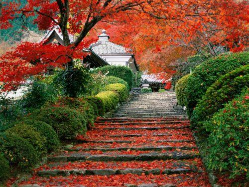 Beautiful-Kyoto-Gardens