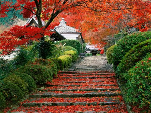 Beautiful-Kyoto-Gardens