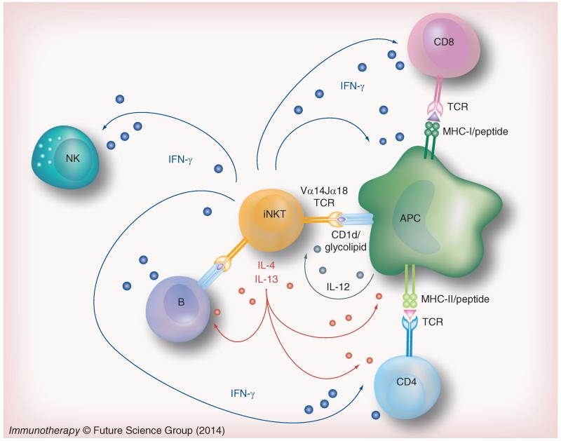 Issues Need To Be Resolved With ImmunoModulatory Therapies