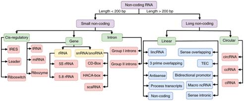 Figure: Overall Taxonomy of ncRNAs